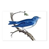 Arctic Bluebird Postcards (Package of 8)