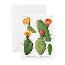 Blooming Cacti #1 Greeting Cards (Pk of 10)