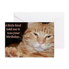 little bird Greeting Cards (Pk of 20)