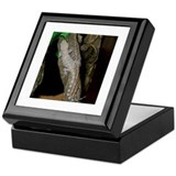 Mediterranean Gecko:Gatsanula Keepsake Box