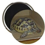 Tortoise Shelby A'Tuin Magnet
