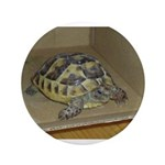 Tortoise Shelby A'Tuin 3.5