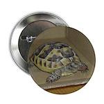 Tortoise Shelby A'Tuin 2.25