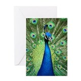 Cute Peacock Greeting Card