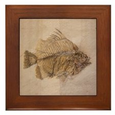 Fish Fossil 2 Art Framed Ceramic Tile