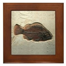 Fish Fossil Art Framed Tile