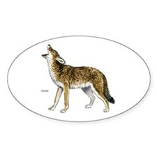 Coyote Oval Decal