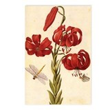 Turks Cap Lily Postcards (Package of 8)