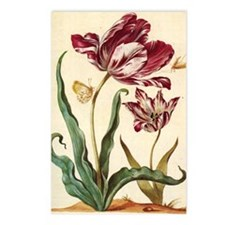 Tulip Diana by Merian Postcards (Package of 8)