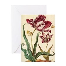 Tulip Diana by Merian Greeting Card