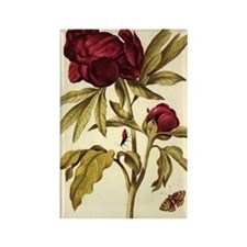 Peony by Merian Rectangle Magnet (100 pack)