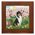 Blossoms / Collie (tri) Framed Tile