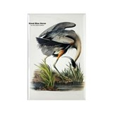 Audubon Great Blue Heron Rectangle Magnet