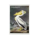 Audubon American White Pelican Rectangle Magnet (1