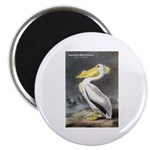 Audubon American White Pelican 2.25