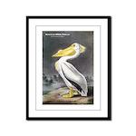 Audubon American White Pelican Framed Panel Print
