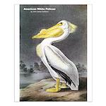 Audubon American White Pelican Small Poster