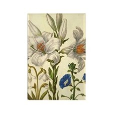 Madonna Lily by Merian Rectangle Magnet (100 pack)