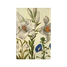 Madonna Lily by Merian Rectangle Magnet