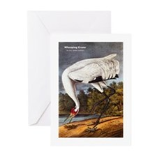 Audubon Whooping Crane Bird Greeting Cards (Pk of