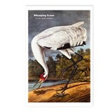 Audubon Whooping Crane Bird Postcards (Package of