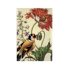 Garden Poppy by Merian Rectangle Magnet (10 pack)