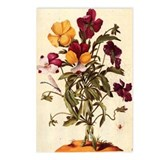 Garden Pansy by Merian Postcards (Package of 8)