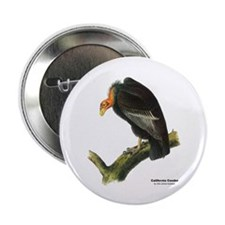 "Audubon California Condor Bird 2.25"" Button"