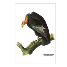 Audubon California Condor Bird Postcards (Package