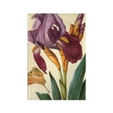 Bearded Iris by Merian Rectangle Magnet (100 pack)