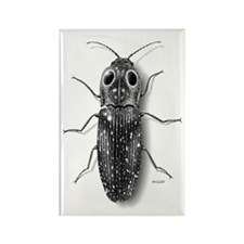 Eyed-Click Beetle Rectangle Magnet (10 pack)