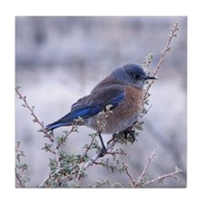 bluebird on a branch Tile Coaster