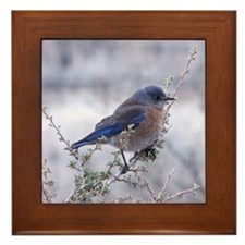bluebird on a branch Framed Tile