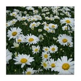 Maine Daisy Garden Blossoms Tile Coaster