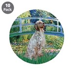 Bridge / English Setter 3.5