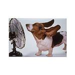Basset Hound Fan - Magnets (10 pack)