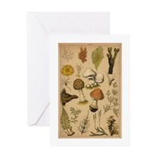 Antique Mushrooms Greeting Card
