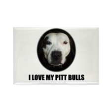 I LOVE MY PITT BULLS Rectangle Magnet