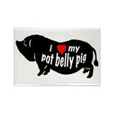 pot belly pig Rectangle Magnet (100 pack)