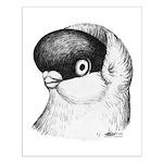 Helmet Shortface Pigeon Small Poster