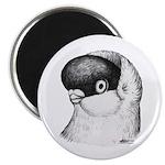 Helmet Shortface Pigeon Magnet