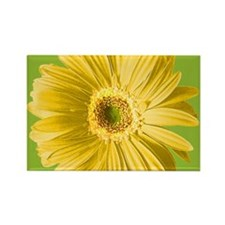 Pop Art Yellow Daisy Rectangle Magnet