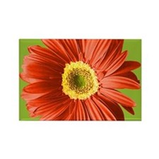 Pop Art Red Gerbera Daisy Rectangle Magnet