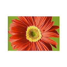 Pop Art Red Gerbera Daisy Rectangle Magnet