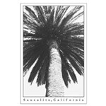sausalito palm tree in black + white poster