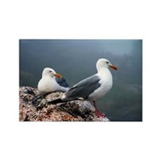 Sea Gulls Rectangle Magnet