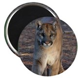 "Cooper's Cougar Shop 2.25"" Magnet (10 pack)"
