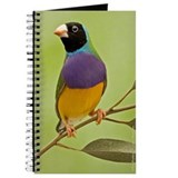 Gouldian in a Gum Tree Journal (BH)