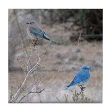 bluebirds on fence Tile Coaster