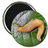 Banana Slug on Leaf Magnet